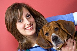 A veterinarian holding a beagle dog isolated over a red background.