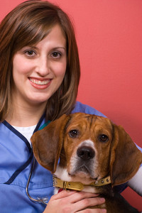 A veterinarian posing with a purebred beagle dog.