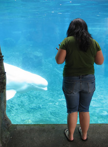 a young woman gazing at a beluga whale