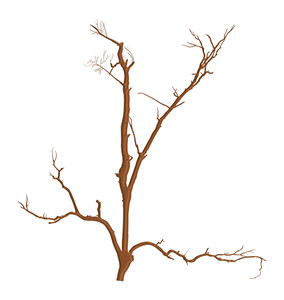Abstract Dry Dead Tree Branches Designs