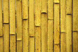 Abstract grunge golden bamboo background