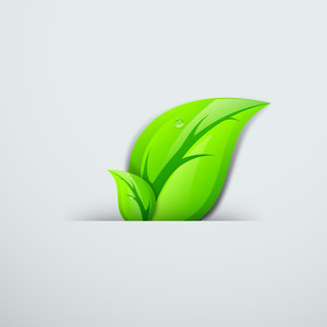 Abstract Nature Background With Green Leaves And Water Drop