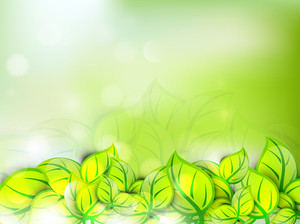 Abstract Nature Coincept With Fresh Green Leaves On Shiny Background