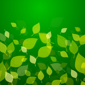 Abstract Nature Concept With Green Leaves