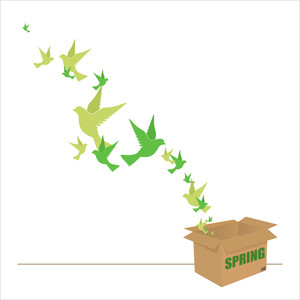 Abstract Vector Illustration Of Box And Birds.