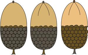 Acorn Nuts Vector