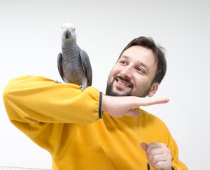 African grey parrot playing with man