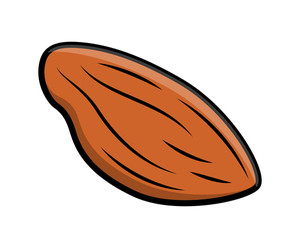 Almond Nut Vector