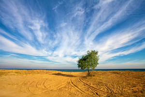 Alone tree at the seashore