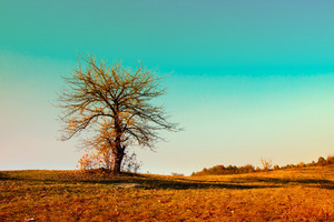 Alone tree in the field in autumn