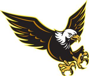 American Bald Eagle Flying