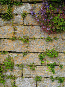 An Old Rock Wall Texture / Background With Some Flowers.