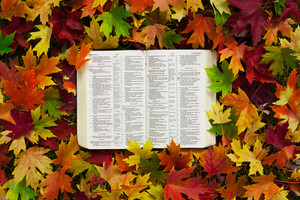 An open Bible rests in a pile of colorful autumn leaves
