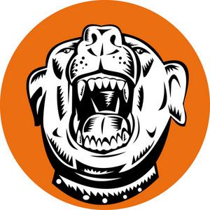 Angry Mongrel Dog