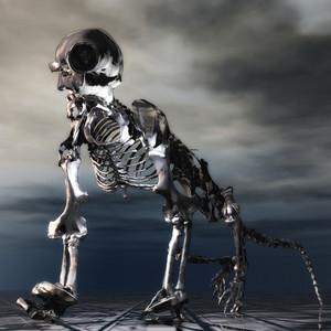 Anteater Skeleton