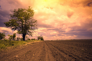 Arable field with pink dramatic cloudy sky and tree
