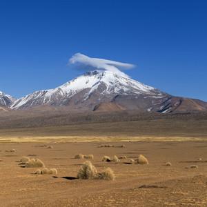 Arid desert vegetation and a snow-capped mountain