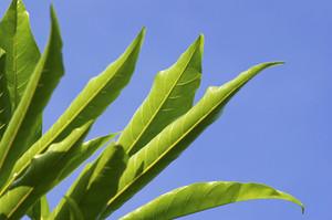 Art green leaf on sky