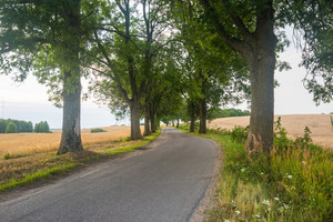 Asphalt road near fields. Polish countryside landscape