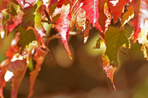 Autumn Background Leaves