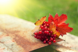 Autumn bouquet from fallen leaves and Cluster of Viburnum on the iron surface