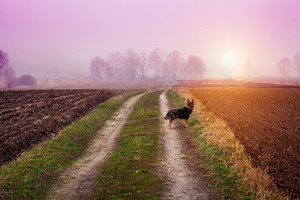 Autumn foggy rural landscape with dog