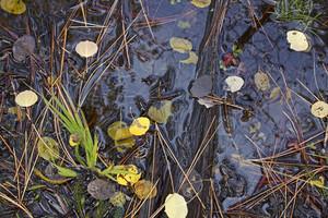 Autumn Ground Background