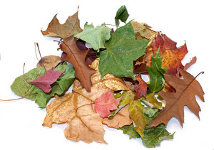Autumn Leaves Pile