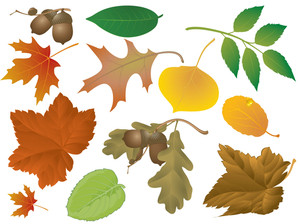 Autumn Leaves. Vector Set.