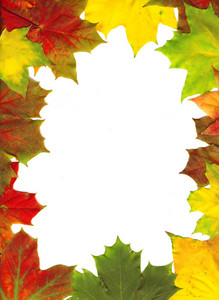 Autumn Maple Leaf Frame Background.
