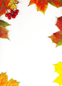 Autumn Maple Leaf Frame Background