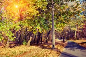 Autumn park in sunny day