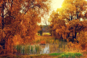 Autumn rural landscape with lake at sunset.