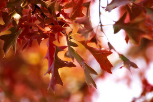 Autumn Season Leaves Background