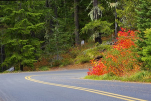 Autumn Trees And Road Background