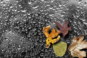 Autumn Wet Background