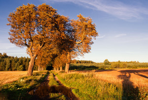 Autumnal landscape.plowed field and chestnut trees