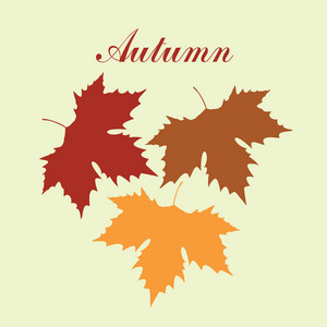 Autumnal Maple Leaf Background