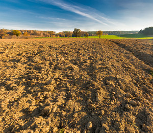 Autumnal plowed field in morning golden light under blue sky with clouds. Beautiful tranquil scene