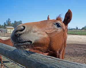 Baby Horse Making Faces