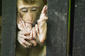 Baby monkey sleep