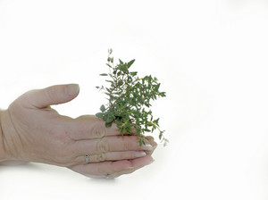 Baby Plant In Hands Background