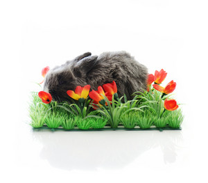 Baby rabbit in grass and flowers isolated with copy space