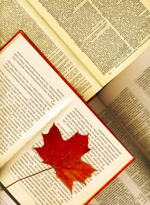 Background Made From Opened Books And Red Maple Leaf