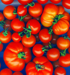 Background Made Of Red Tomatoes