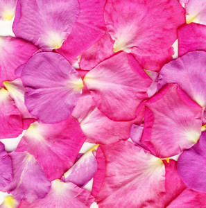 Background Rose Petals