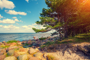 Baltic sea coast with pine trees