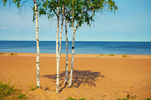 Baltic sea wild beach in calm weather with birch trees in front