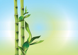 Bamboo Branch Vector