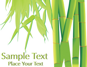 Banner Bamboo With Its Leaf Isolated On White